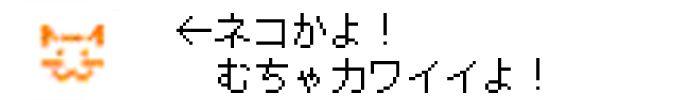 三村メール 猫