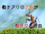 働きアリに関する面白い雑学